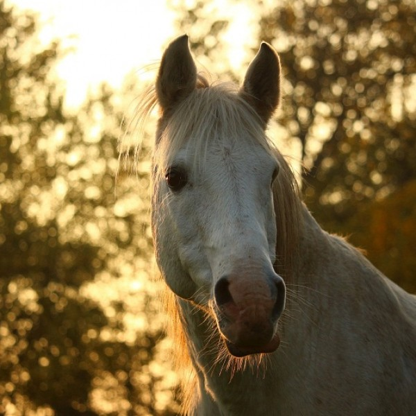 escrursioni toscana a cavallo