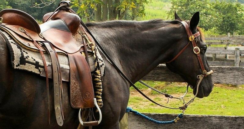 escursioni toscana a cavallo